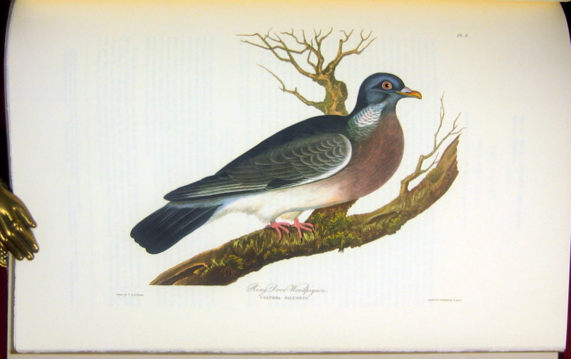Image for A Selection of British Birds