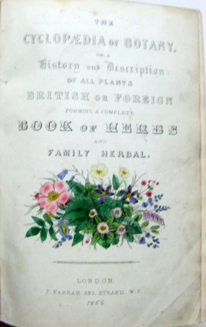 Image for New Cyclopaedia of Botany and Complete Book of Herbs (2 vols)