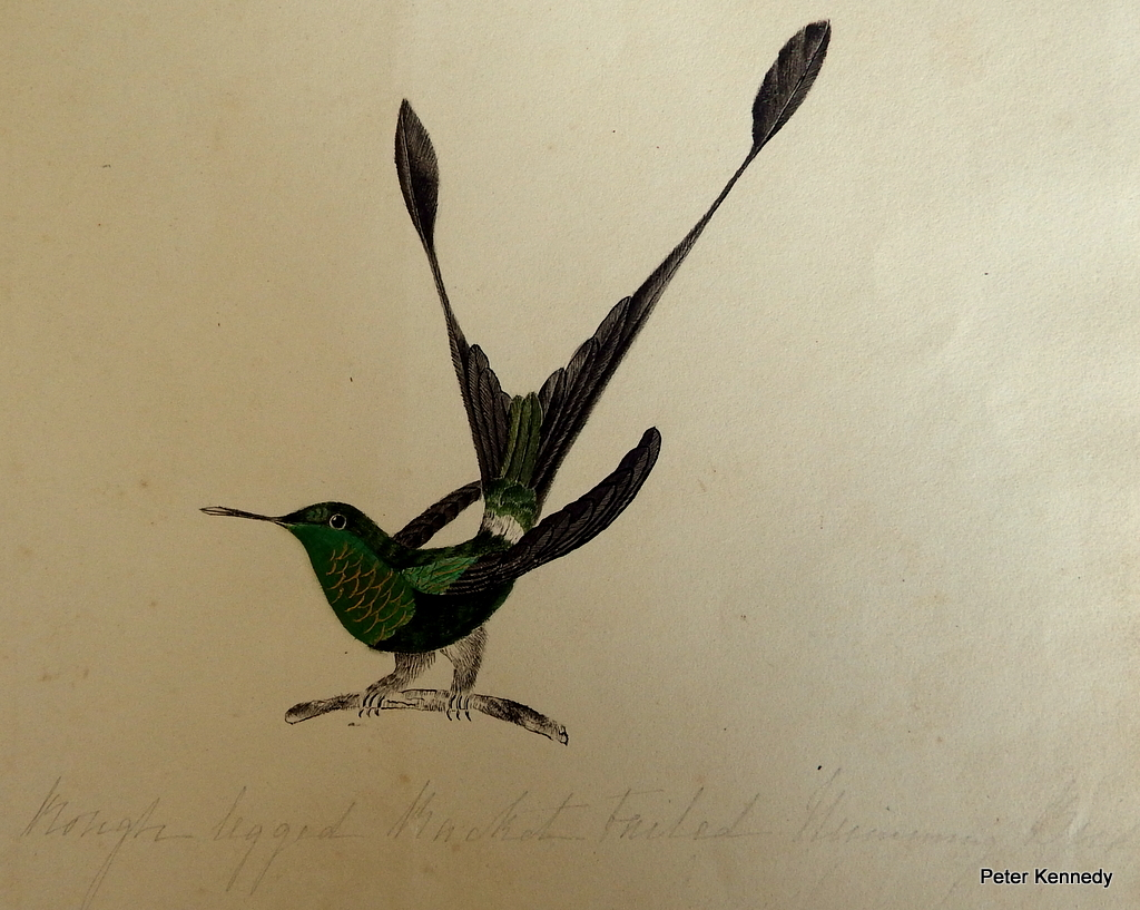 Image for Humming Bird Painting